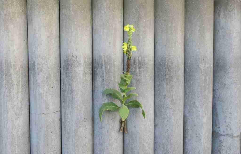 Anpassungsfähigkeit als Erfolgsfaktor: Lernen von der Natur